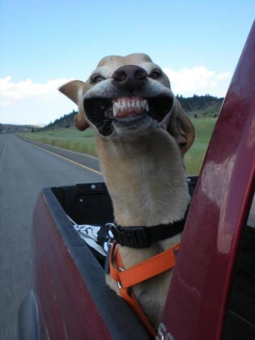 Νομίζετε ότι τα κατοικίδια ζώα σας δεν μπορούν να προσβληθούν από από ασθένειες των ούλων; Ή ότι τα δόντια τους δεν χρειάζονται την κατάλληλη φροντίδα;